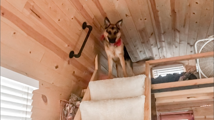 dog in a tiny house